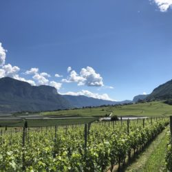 Weintipp_sauvignon-blanc-Südtirol_Voglar_Dipoli