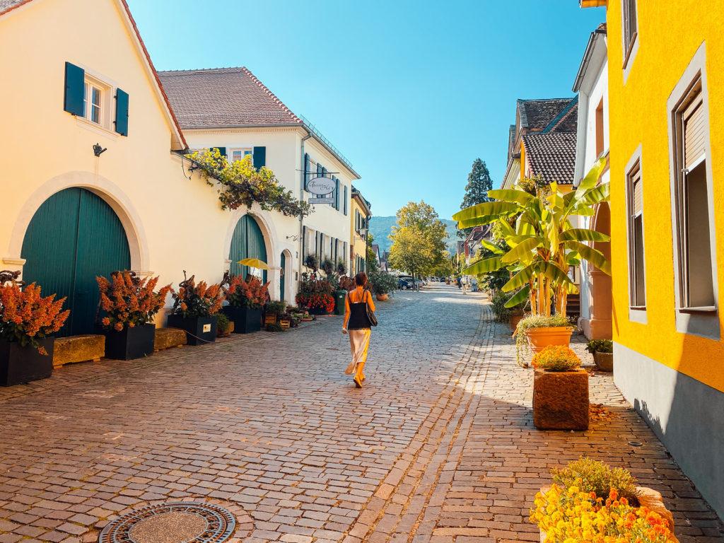 Pfalzimpressionen Rhodt unter Rietburg