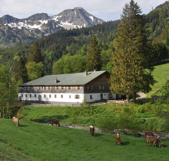 Geheimtipp Allgäu Alpe Mitterhaus