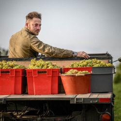 Weintipp Bodensee Auftricht