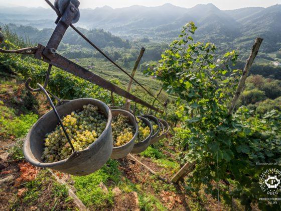 Weintipp Prosecco: San Venanzio Fortunato