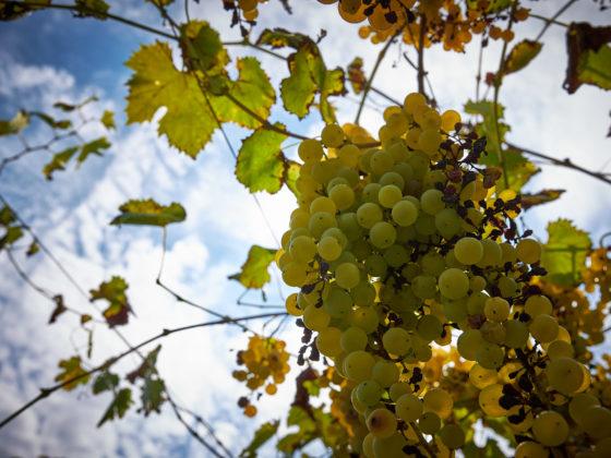 Weintipp Iseosee Fraciacorta