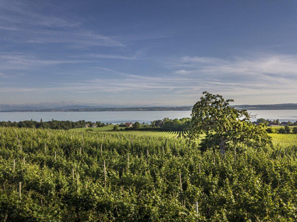 Weintipp Bodensee