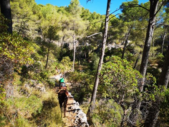 Naturacavall Geheimtipp Mallorca Pferde Ausritt