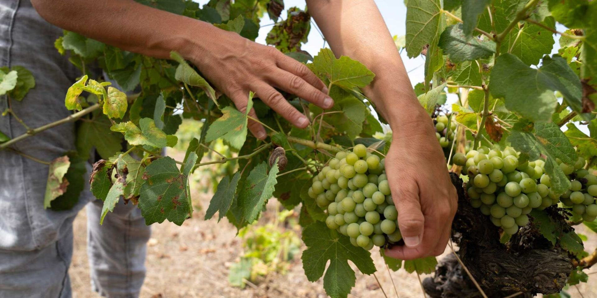 Weintipp Mallorca