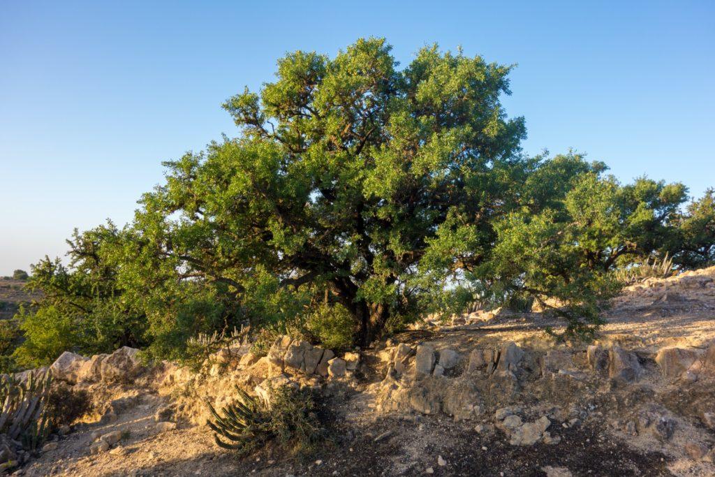 Sardinien Wein Kork