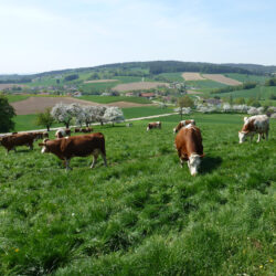 Rottal Tipps Niederbayern