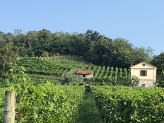 Weintipp Lago Maggiore