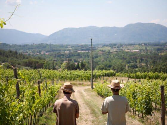 Wein Versilia Calafata