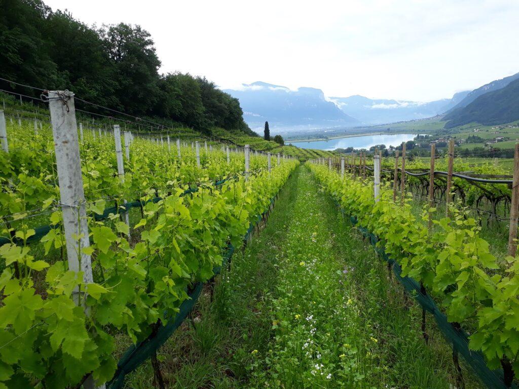 Seppi Weine Kaltern Südtirol